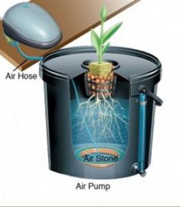 Hydroponic Bucket Growing Sysytem